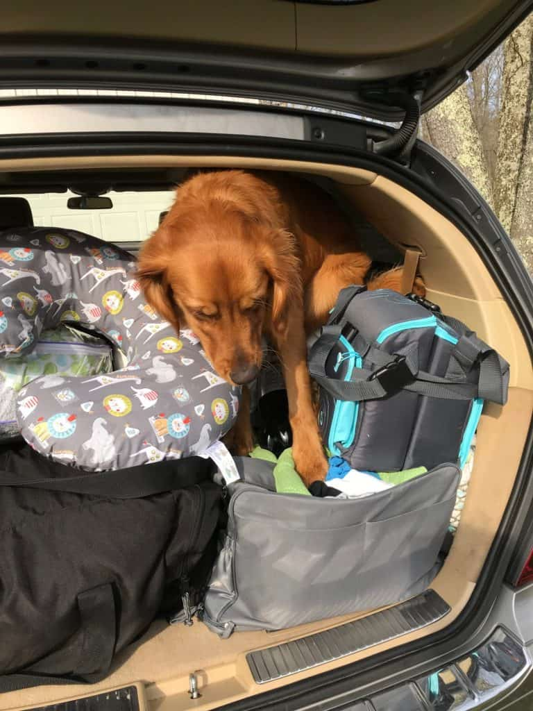 Dog in a car with lots of luggage